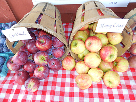 pick your own apples at the orchard