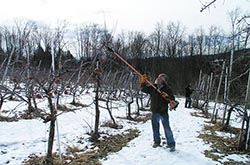How We Grow - Pruning