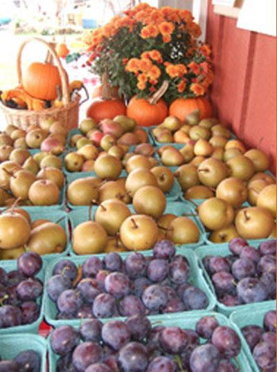 wholesale_fruit2