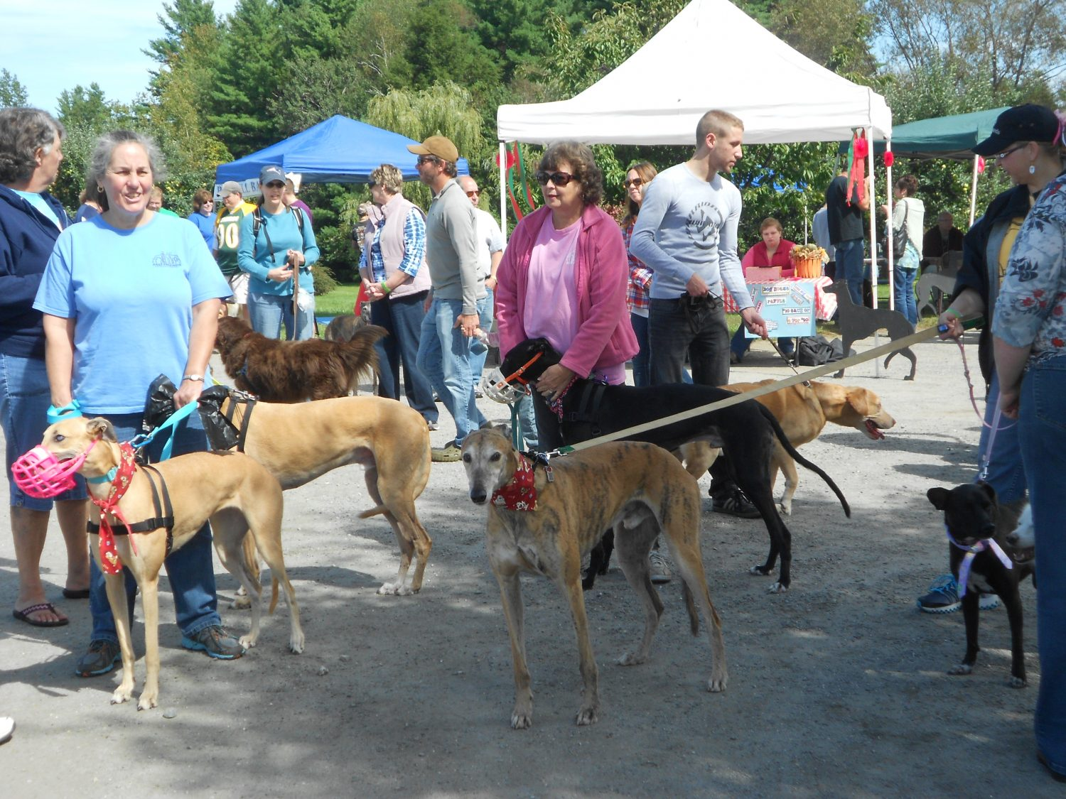 12th Annual Walk with the Greyhounds & Chili Cook-Off